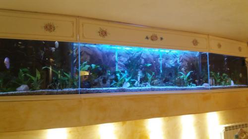 Acquario 1800 litri-4