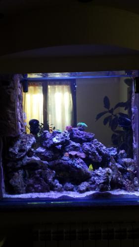Acquario bifacciale-10