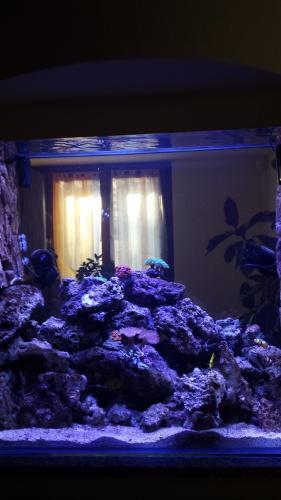 Acquario bifacciale-11