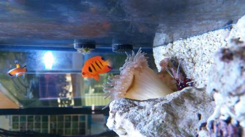 Coralli e pesci-1
