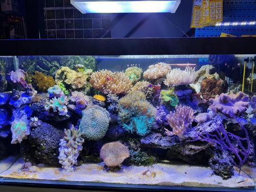Coralli e pesci-10