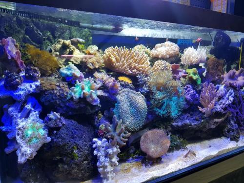 Coralli e pesci-11