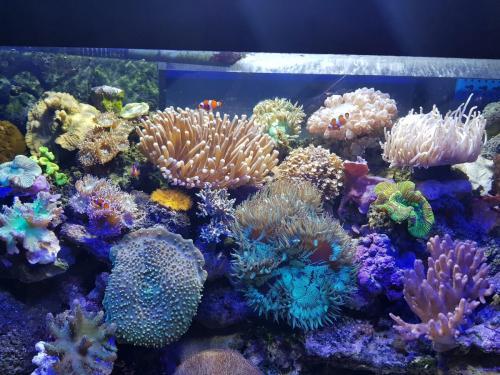 Coralli e pesci-12