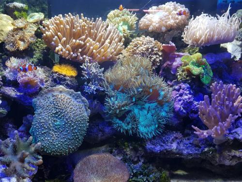 Coralli e pesci-13