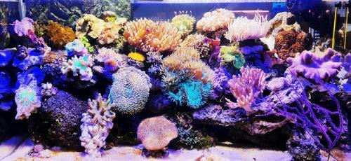 Coralli e pesci-14