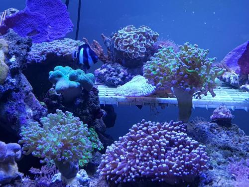 Coralli e pesci-15