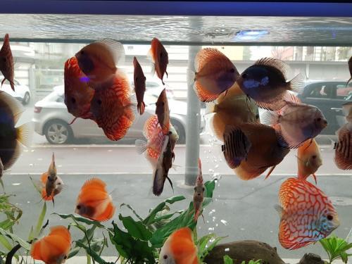 Coralli e pesci-16
