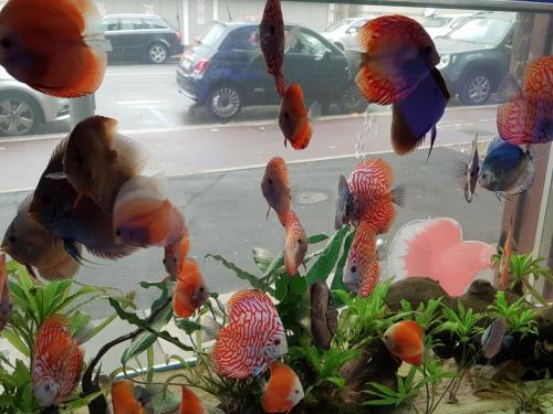 Coralli e pesci-17