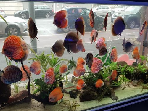 Coralli e pesci-18