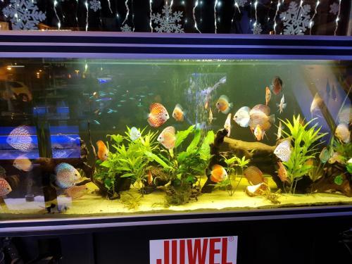Coralli e pesci-19
