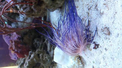 Coralli e pesci-2