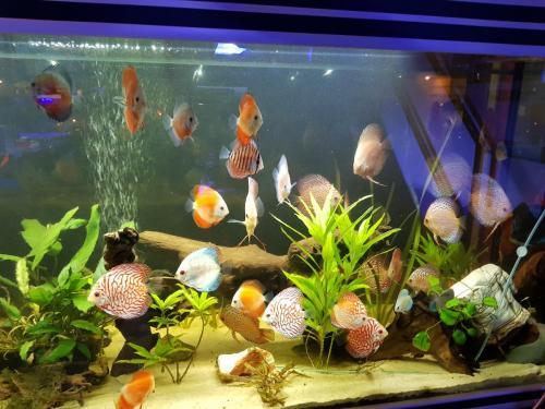 Coralli e pesci-20