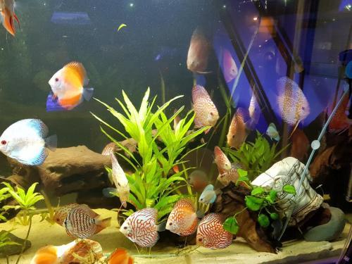 Coralli e pesci-21