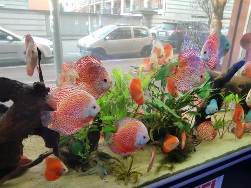 Coralli e pesci-22
