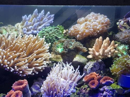Coralli e pesci-24
