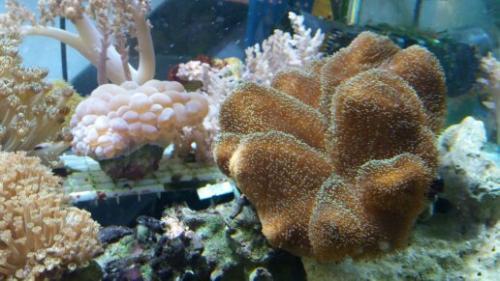 Coralli e pesci-26