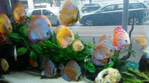 Coralli e pesci-28