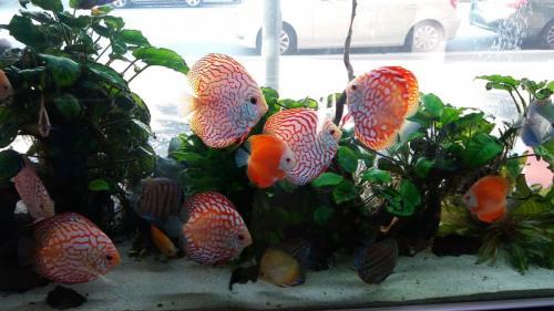 Coralli e pesci-3