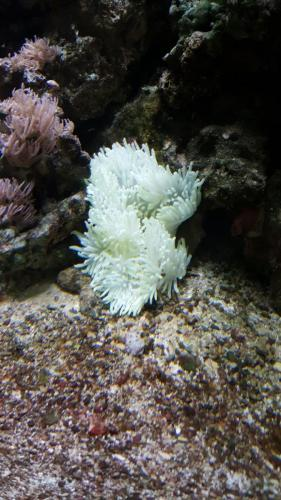 Coralli e pesci-31