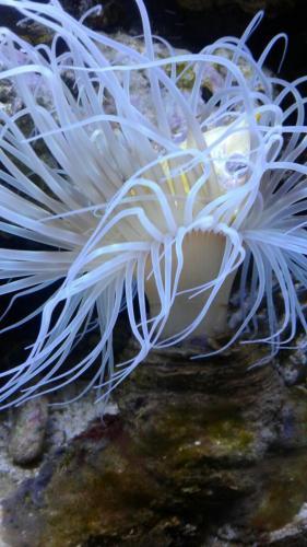 Coralli e pesci-32