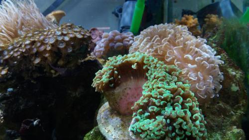 Coralli e pesci-4