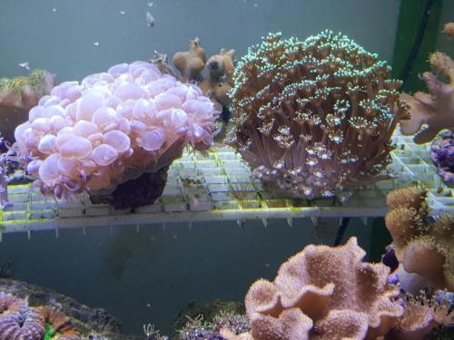 Coralli e pesci-5
