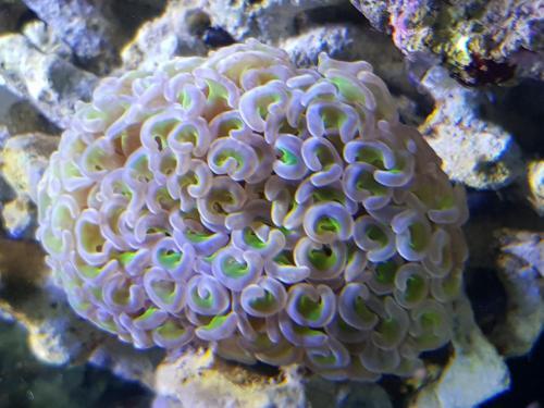 Coralli e pesci-6