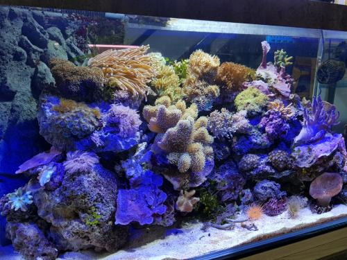 Coralli e pesci-7