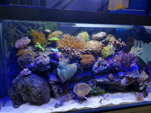 Coralli e pesci-8